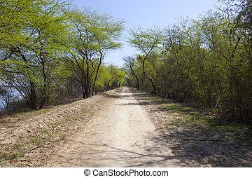 acacia lined road at harike wetlands india - an acacia lined...