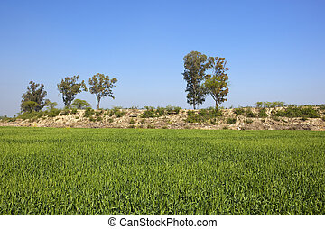 wheat field and rocky bank - a green wheat field with a...