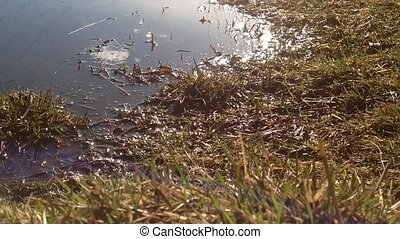 Grass under water and above water. The reflection wires and...