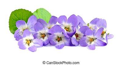Bouquet of violets flowers.