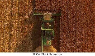 Combine harvester and golden field. Agricultural machine...