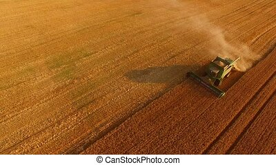 Combine in action, aerial view. Process of harvesting crops.