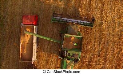 Combine unloads grain in truck. Machines in the crop field.