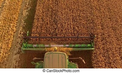 Combine cutting wheat, top view. - Combine cutting wheat top...