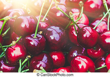 Ripe red sweet cherry. Agricultural background - Ripe red...