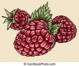 Engrave isolated raspberry hand drawn graphic illustration -...