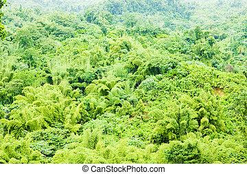 Grenada, Caribbean - inland of Grenada, Caribbean