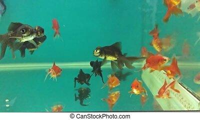 Aquarium relaxing fish swimming in the water meditation