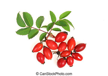 Hawthorn fruits - Crataegus monogyna, known as Common...