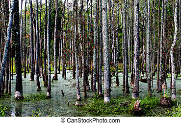 Swamp - An old swamp in a rural area