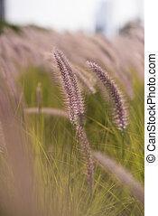 Alpine meadow - Beautiful nature landscape Alpine meadow....