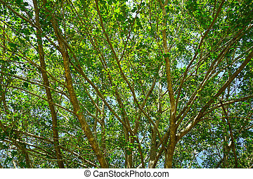 Tree with green leaves in spring season.