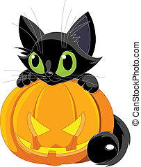 Black cat - A cute black cat on a pumpkin.