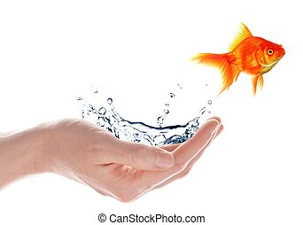 freedom free flee or escape concept with goldfish and hand