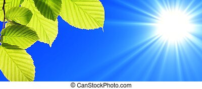 blue sky and leaf - green leaf and blue sky with sun in...