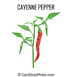 Cayenne pepper pod on green stem with leaves - Cayenne...