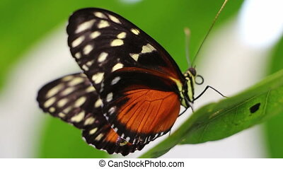 Macro view of a butterfly on a leaf - Shot of Macro view of...