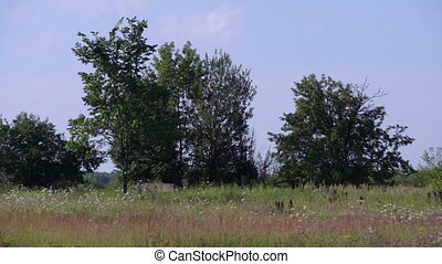 summer field with trees scenic view - russian summer field...