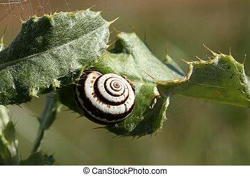 Slug on a thorn