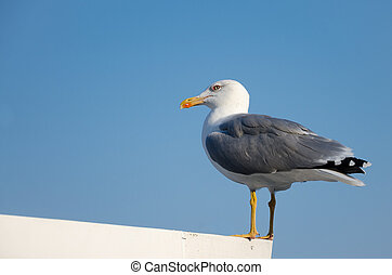 seagull sitting on a roof on sky background