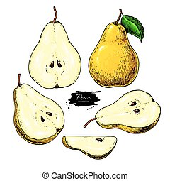 Pear vector drawing. Isolated hand drawn full pear and...