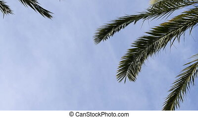 Date palm leaves and white clouds background. Tropikal sky....