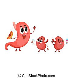 Funny, smiling human stomach and kidney characters, digestive organs