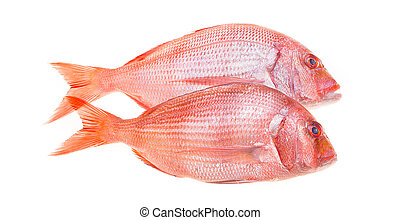 Snapper Fish Isolated - Fresh snapper fish isolated on...