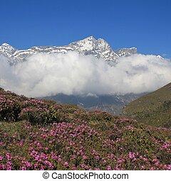 Spring scene in Namche Bazar, Everest National Park, Nepal....