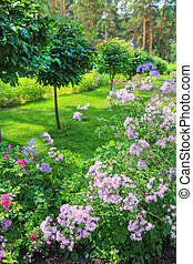 Blossoming colorful flowerbeds in summer park - Blossoming...