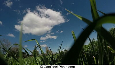 Pov Walking In The Grass - Camera point of view at grass...