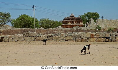 Goats Walk along Empty Square against Ancient Ruins - black...