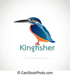 Vector of Common kingfisher (Alcedo atthis) on white...