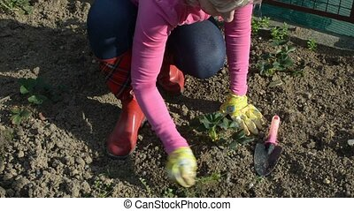 Woman maintaining soil in a garden - Woman in garden clothes...