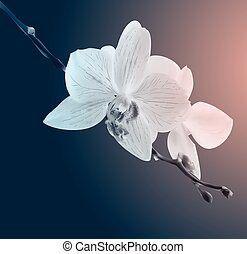Beautiful orchid flowers. Vintage card. Sad mood.