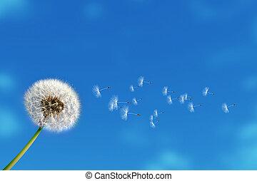 dandelion - flying dandelion seeds on blue sky