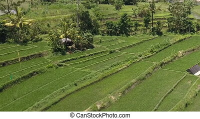 Aerial view on rice terraces, Bali, Indonesia - Aerial view...