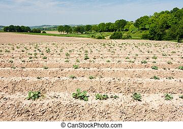 espargos, agricultura