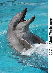 Smiling Dolphin portrait - Bottlenose dolphin with its head...
