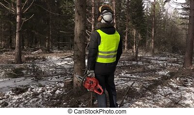 Lumberjack with chainsaw checking the tree in forest