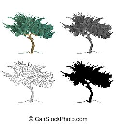Old tree mountain Cupressus vector.eps - Old tree mountain...