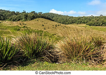 Beautiful view of Horton Plains - Scenic landscape of...