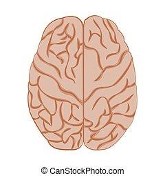Medicine icon brain. - Medicine icon brains, vector image...