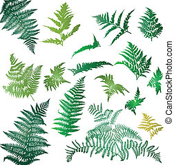 Fern leaves illustrated in a set of design elements