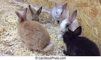 rabbit. Small rabbits eat from the trough, contact zoo the...