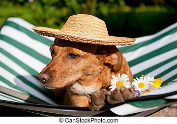 Dog on vacation - Dog lazy on its bed with funny hat and...