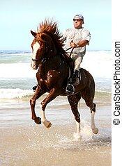 Horse rearing at beach