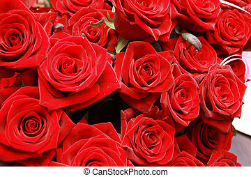roses - Big bunch of red roses