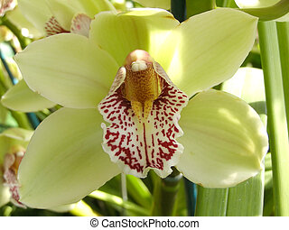 orchid - A yellow orchid is in the botanical garden of city...