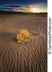 Single Tumble Weed on Sand dune at sunset in the Nevada...